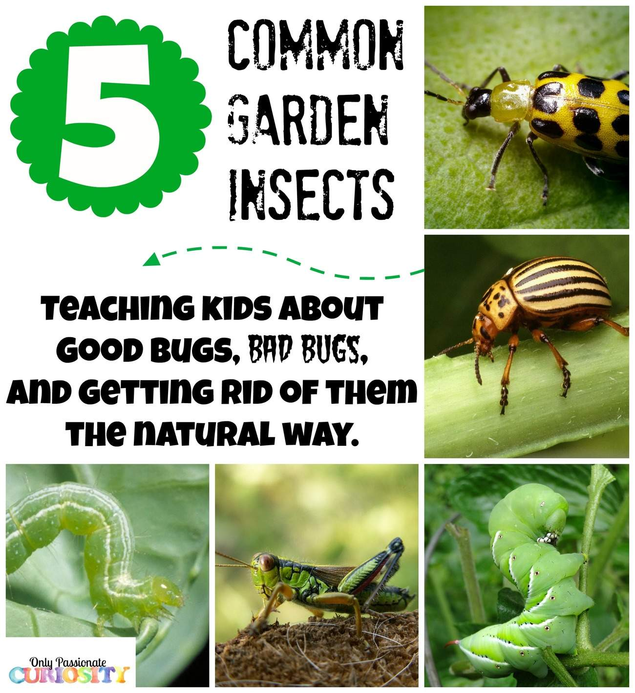 Teaching Children About Garden Bugs And Natural Pesticide