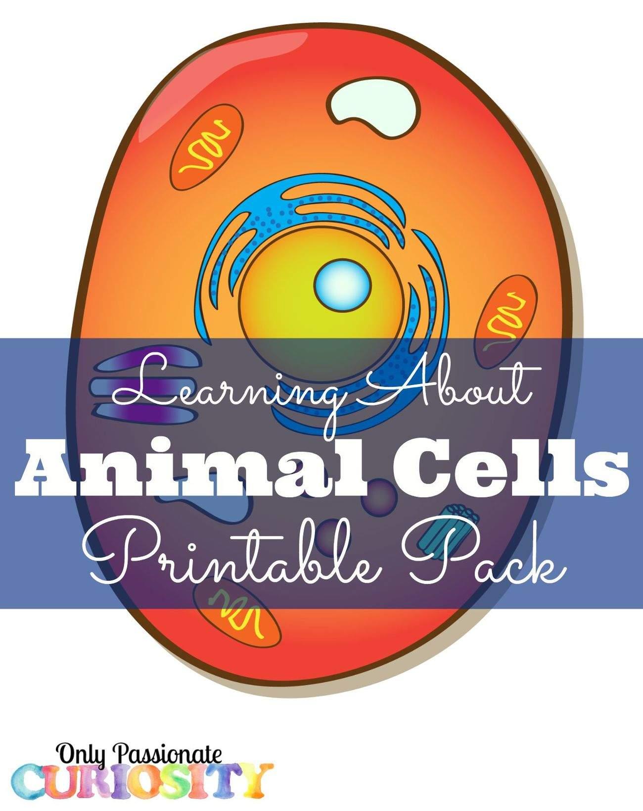 Animal Cell Printable Pack