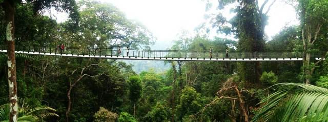 The Habitat on Penang Hill, Canopy Walk