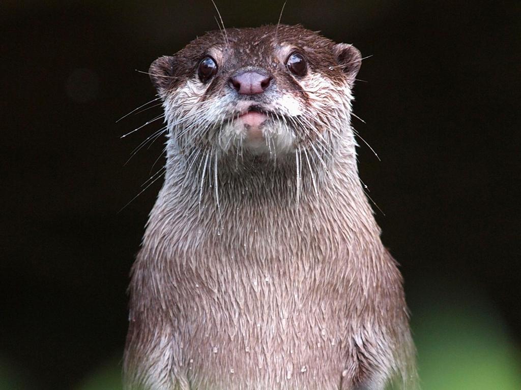 Windows 10 Otter Theme