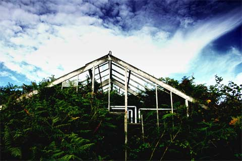 Abandoned greenhouse on Guernsey, overgrown with ferns