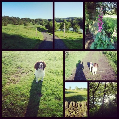 Early morning walks with Henry-dog remind me how much I love living here. These are all 5-10 mins from home #Yorkshire