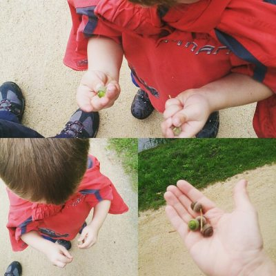 Acorn collecting on river bank