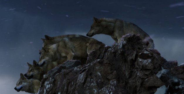 Le dernier loup_48