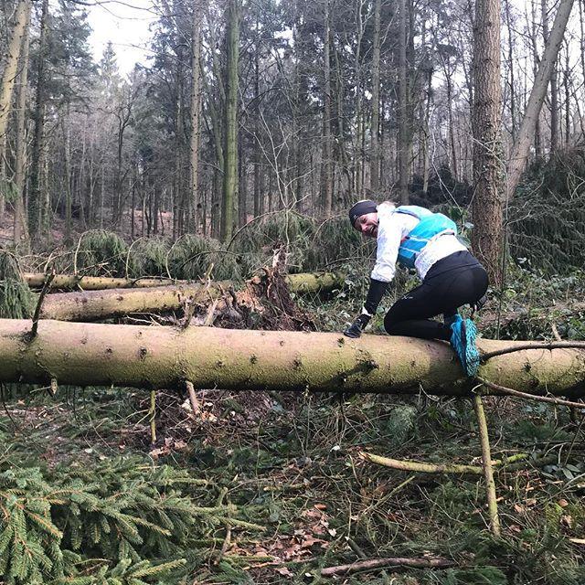 Veel schade in het bos #februaristorm
