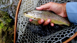 Credit River brown.