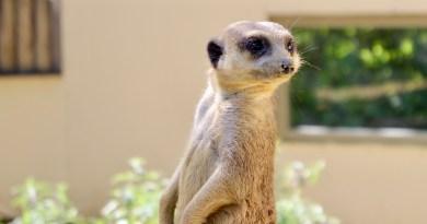 15 raisons de visiter le zoo d'Amiens