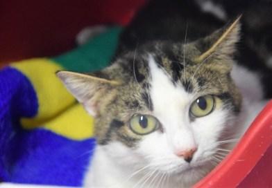 5 chats à adopter au refuge d'Essuilet et de l'Oise