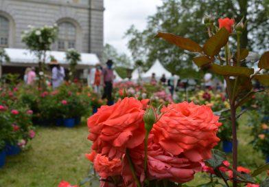 Quand les roses envahissent l'Abbaye de Chaalis