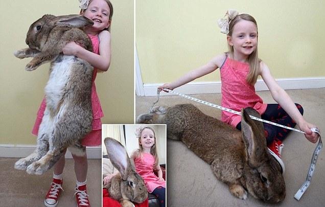 صور لأضخم أرنب في العالم
