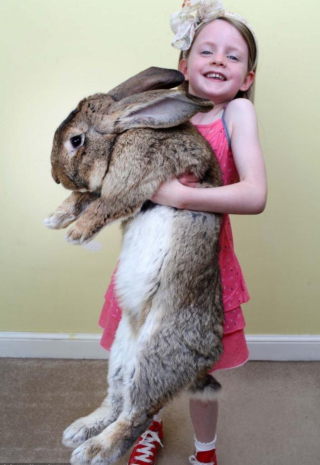 اضخم ارنب1