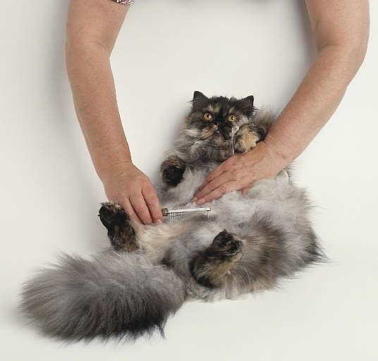 كيف تحافظين على نظافة و جمال قطتك ؟! (4)