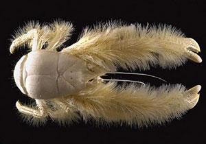 أغرب الحيوانات البحرية المكتشفة ! (6)