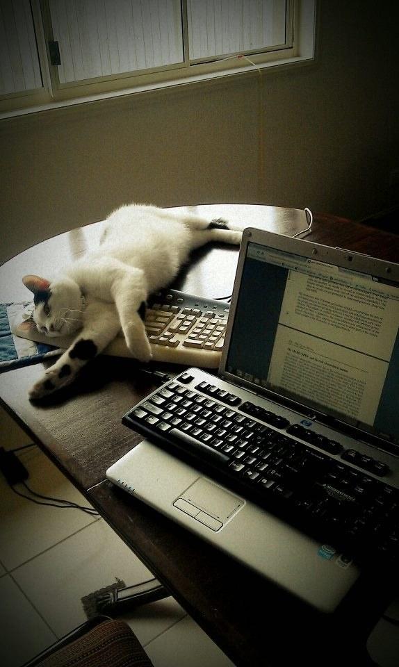 منتوجات لراحة القطط و حماية المنزل من عواقب إقتنائها ! (9)