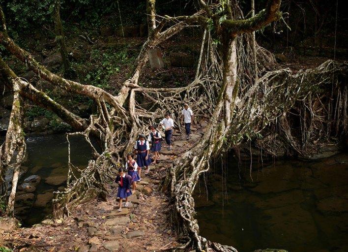العبور من غابة في الهند