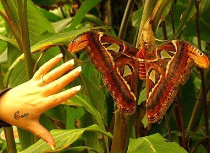 حشرات عملاقة