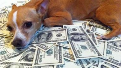 الكلاب صارت أغنى مننا !!!