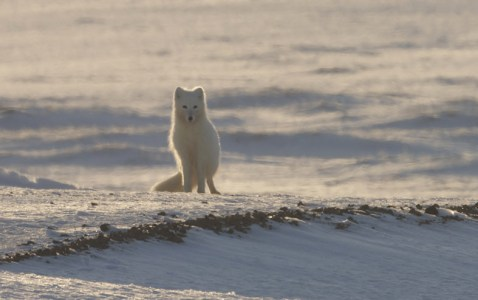 Preview – Alaska: Year in the Wild