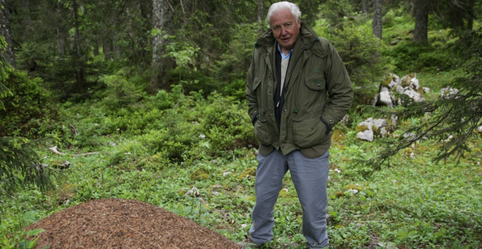 Attenborough and the Empire of Ants