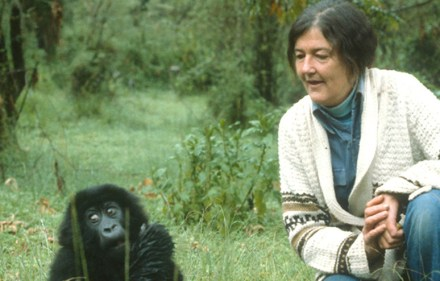 Preview – Dian Fossey: Secrets in the Mist