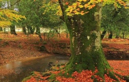 Preview – New Forest: a Year in the Wild Wood