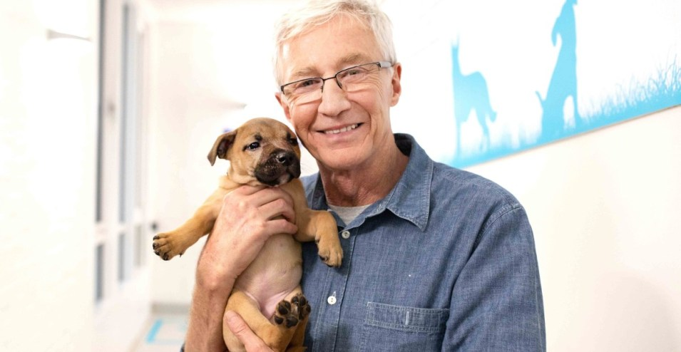 Paul O'Grady For the Love of Dogs What Happened