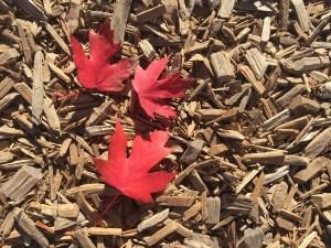 toronto weather in fall