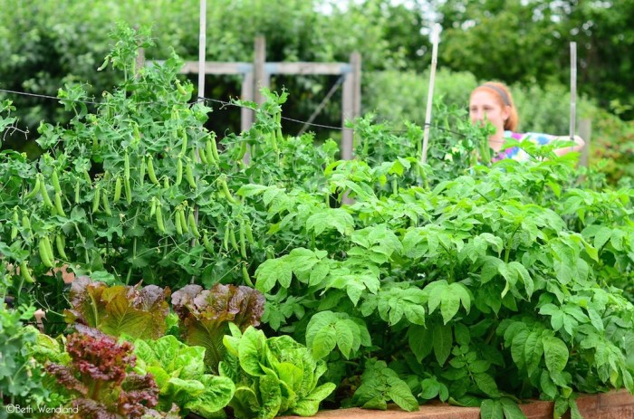 5 things you can do in your backyard garden, right now - raised bed garden