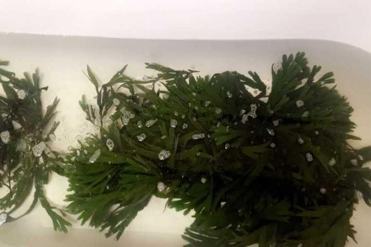 Collins Seaweed Baths