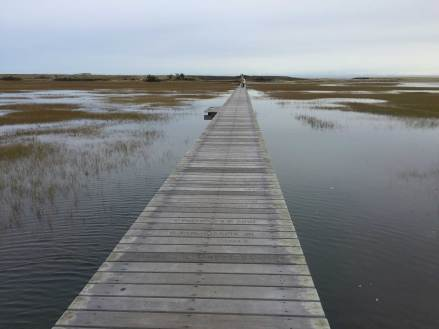 Sandwich-Boardwalk,-Cape-Cod-13