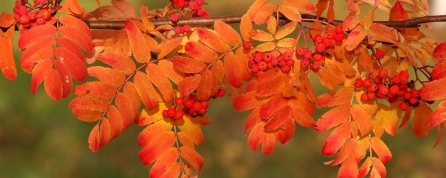 123autumnleaves_branch-849x340