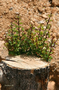 photography-tree-new-growth-nature-swittersb