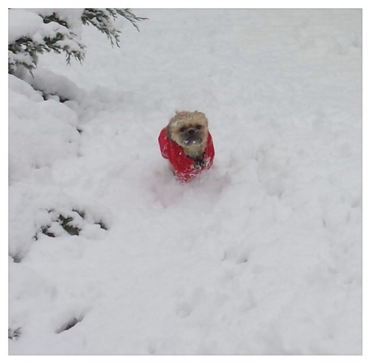 He dog who loves Christmas