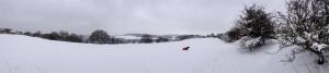 Panoramic Dog