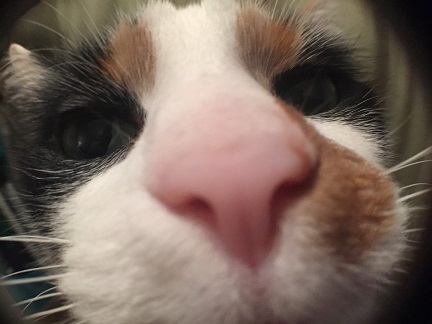 Fifi snout on macro