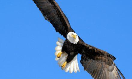 Ducks Quack, Eagles Fly