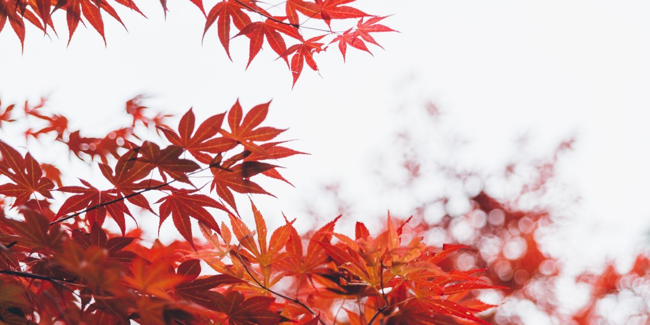 Times of Refreshing Autumn Devotional
