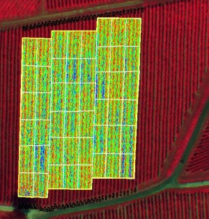 Crop management with multispectral camera on UAV - OnyxStar drone