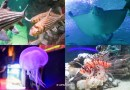 Aquaria KLCC 90m Underwater Tunnel with Stingrays, Sharks & Turtles!