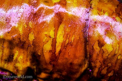 Roast Pork Skin Bali Indonesia photo Ooaworld