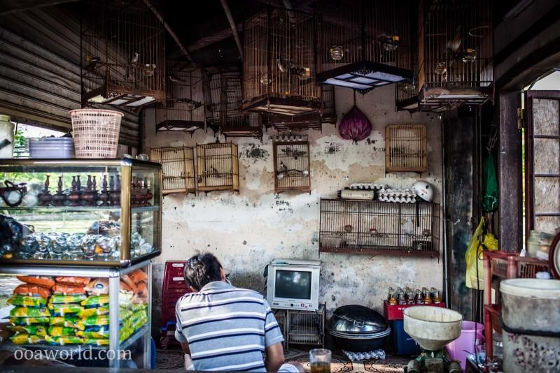 Vietnam Birdhouse Hue Photo Ooaworld