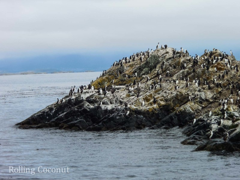 Ushuaia Argentina Cormorants Beagle Channel ooaworld Rolling Coconut Photo Ooaworld