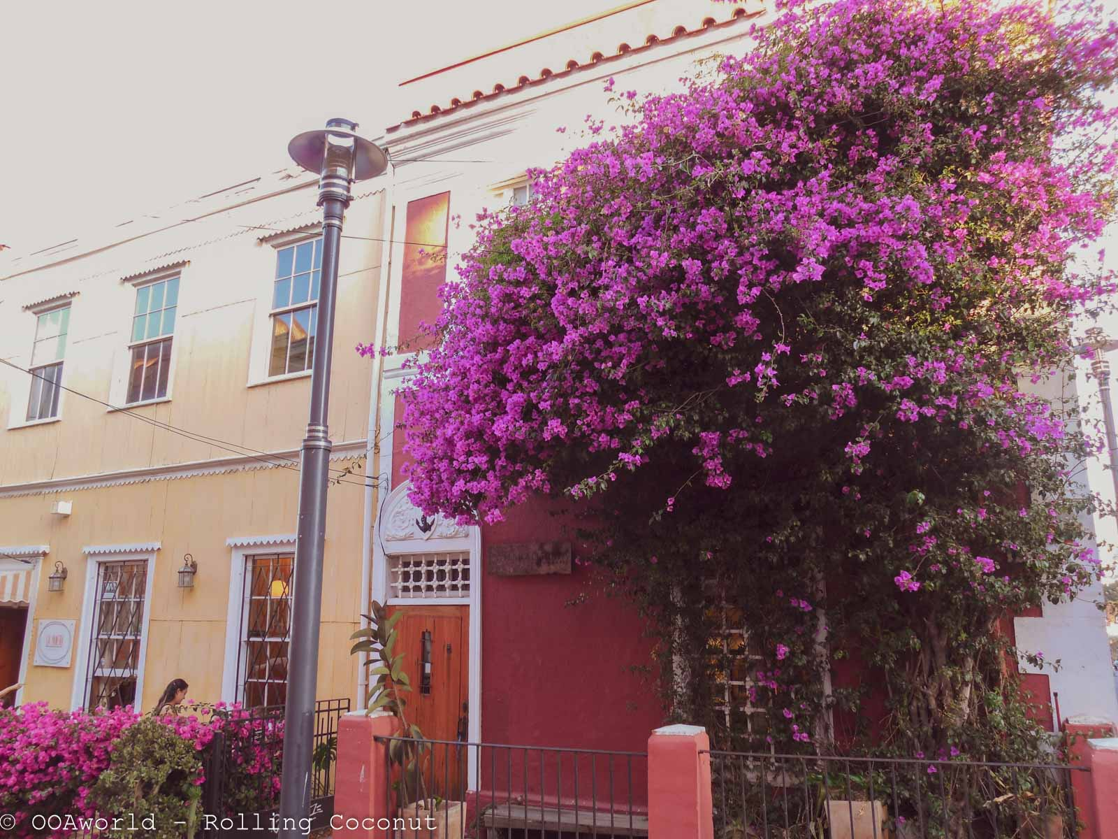 House Flowers Valparaiso Chile Photo Rolling Coconut Ooaworld