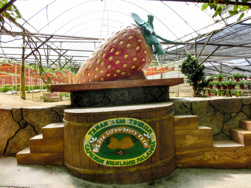Big Red Strawberry Farm Malaysia photo ooaworld Rolling Coconut