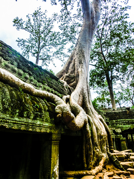 ta promh angkor cambodia photo ooaworld Rolling Coconut