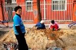 beijing playful watch photo ooaworld