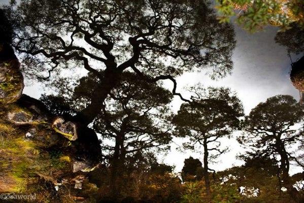 Kyoto, Zen Garden landscape Trees texture Ginkaku-ji