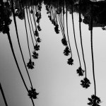 santa monica palm path USA road trip photo ooaworld