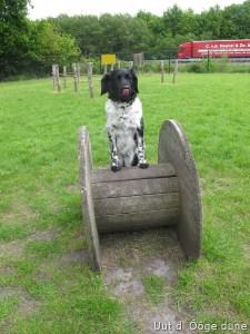 de honden speeltuin