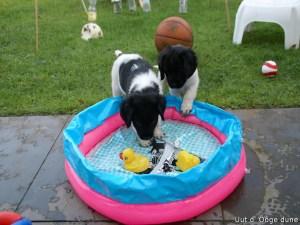 een zwembad !!